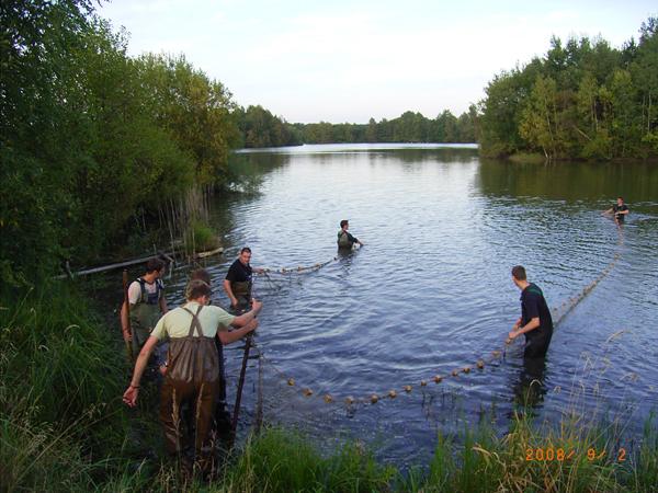 Abfischen im Teich mit vielen Helfern