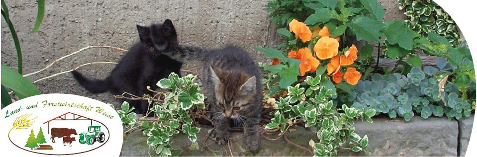 spielende Katzenkinder im Hof